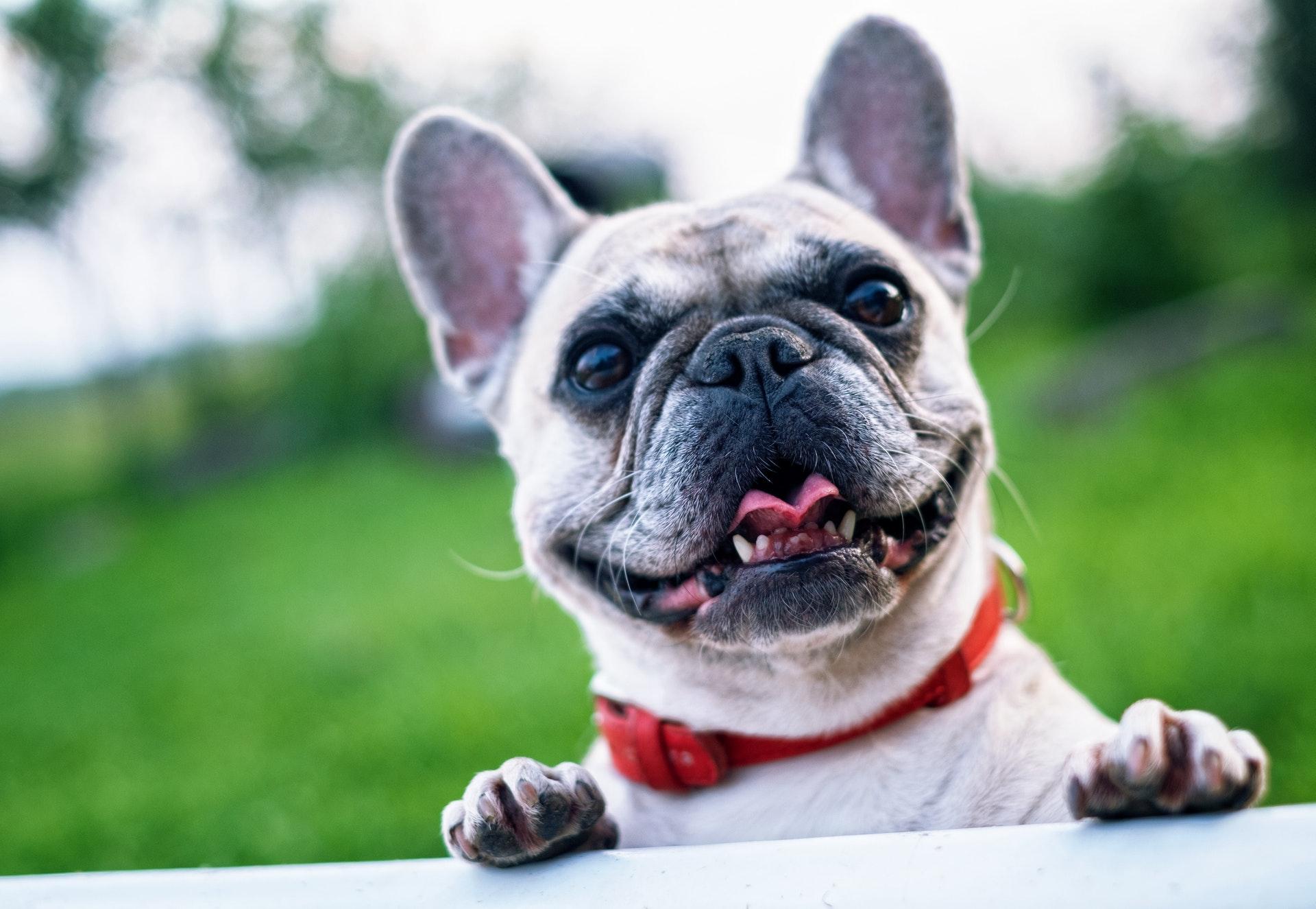 honden en tuinen tips