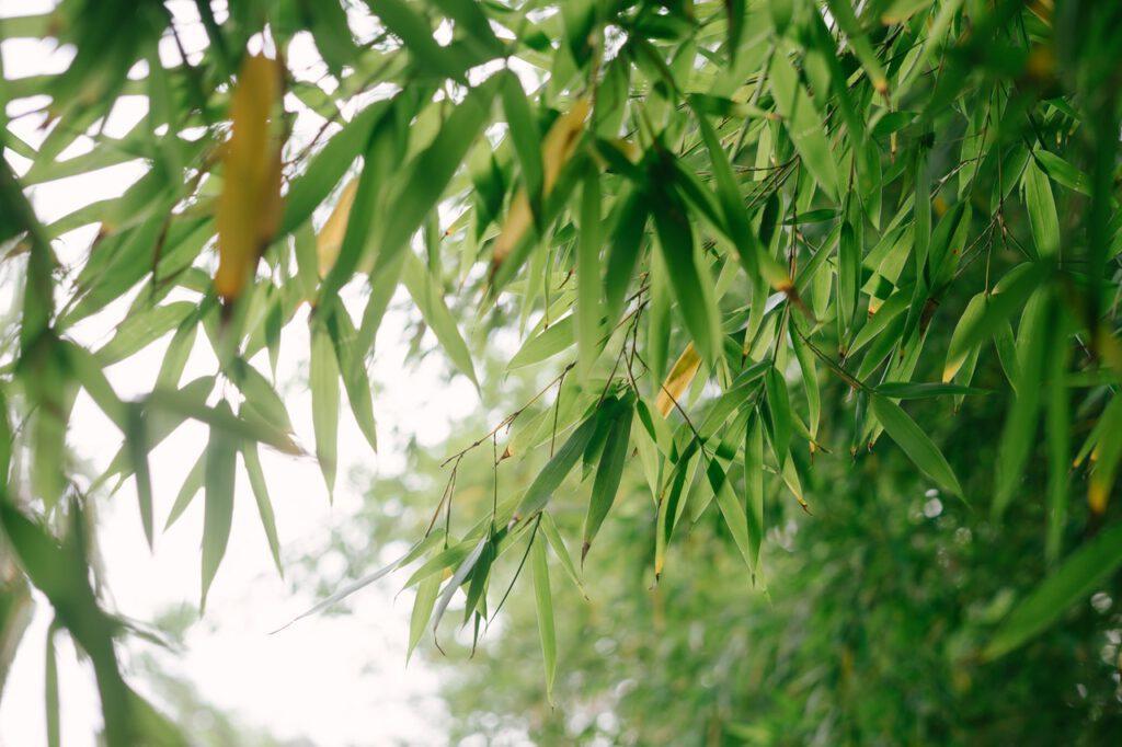 bamboe bekers